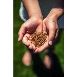 Křupaví červíci, jedlý hmyz a mouční červi