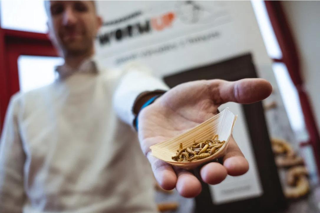 hmyz budoucnost potravinářství
