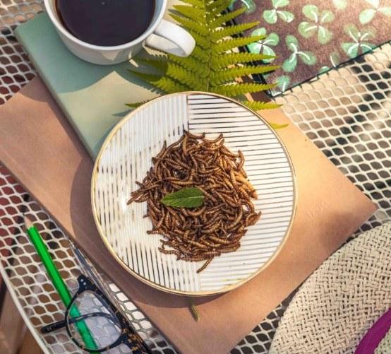 Spořádají tunu červů měsíčně. Zakladatelé firmy WormUp považují hmyz za jídlo budoucnosti
